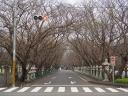 Road to Chiran Peace Museum, Chiran Town